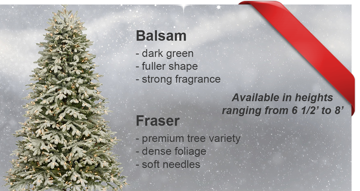 Balsam, Fraser Christmas Trees for Sale, Harrow Ontario