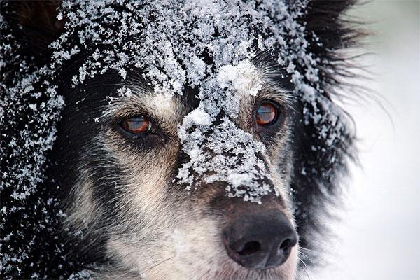 Winter Animal Care