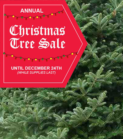 Real Christmas Trees, Harrow, Windsor