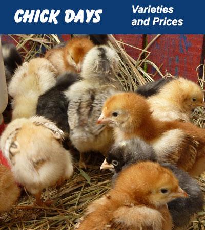 Chick Price List