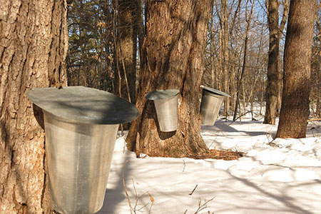 5th Annual Maple Syrup Festival, Harrow Ontario
